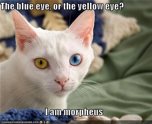 The blue eye, or the yellow eye?  I am morpheus