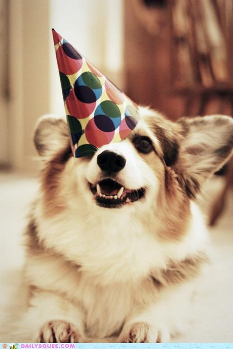 askew,corgi,cute,derpy,dogs,Hall of Fame,hat,party hat,puppy