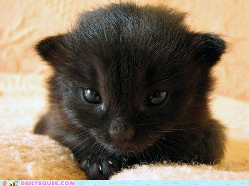 All Glory to the Hypno-Kitten?