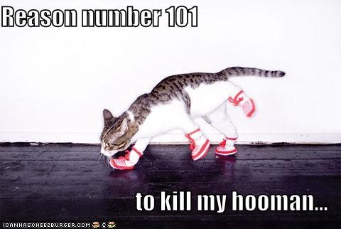 Reason number 101   to kill my hooman...