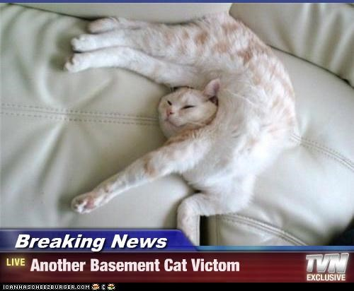 Breaking News - Another Basement Cat Victom