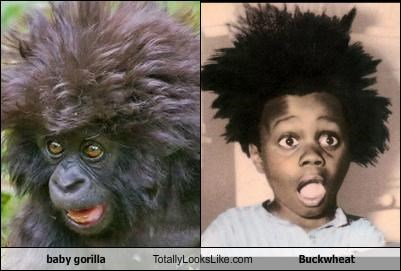 baby gorilla,buckwheat,facial expressions,gorilla,hair standing on end,little kids,little rascals,shocked,surprised