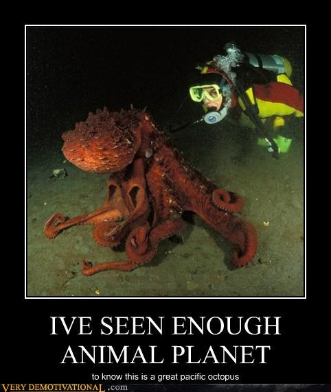 animal planet,huge,octopus,Pure Awesome