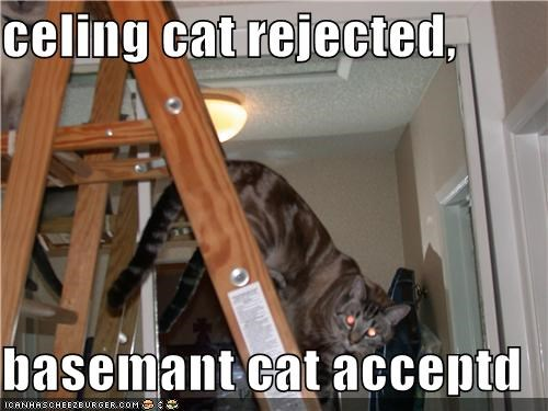 celing cat rejected,  basemant cat acceptd
