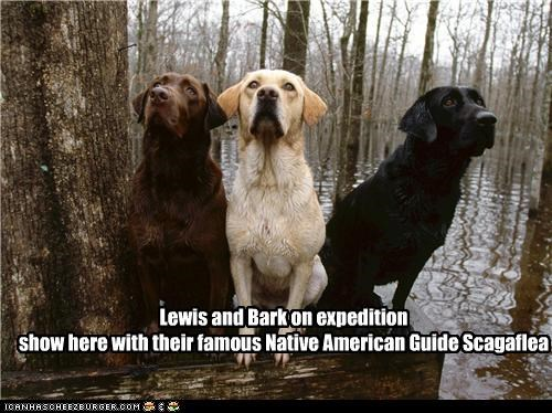 american history,exploration,friends,history,labrador,labradors,Lewis and Bark,Lewis and Clark Expedition,outdoors,Scagaflea,searching