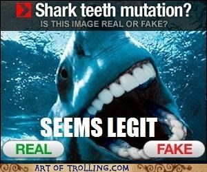 Pearly White Shark