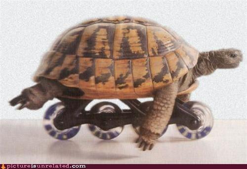 faster,rollerblade,turtle,wheels,wtf