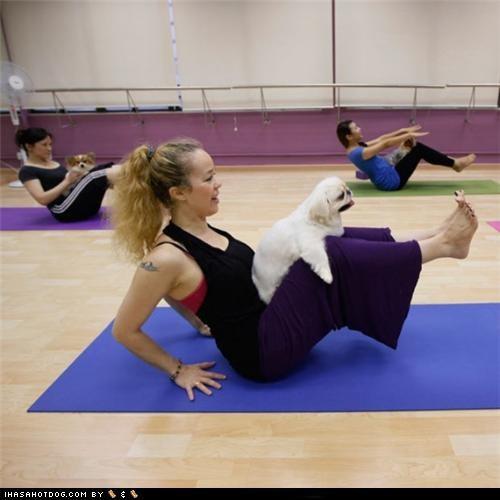 dog yoga,health,yoga