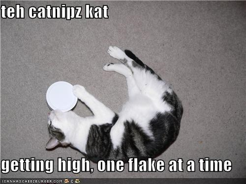 teh catnipz kat  getting high, one flake at a time