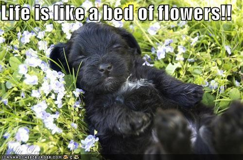 Life is like a bed of flowers!!