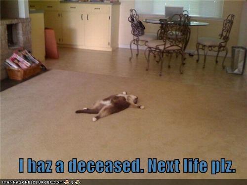 I haz a deceased. Next life plz.