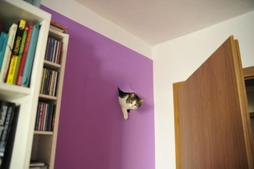 Cat Out Of Nowhere,kitteh,suddenly,Wall Cat