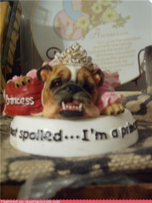 Spoiled Bulldog