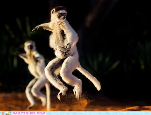 Acting Like Animals: Run Lemur Run!