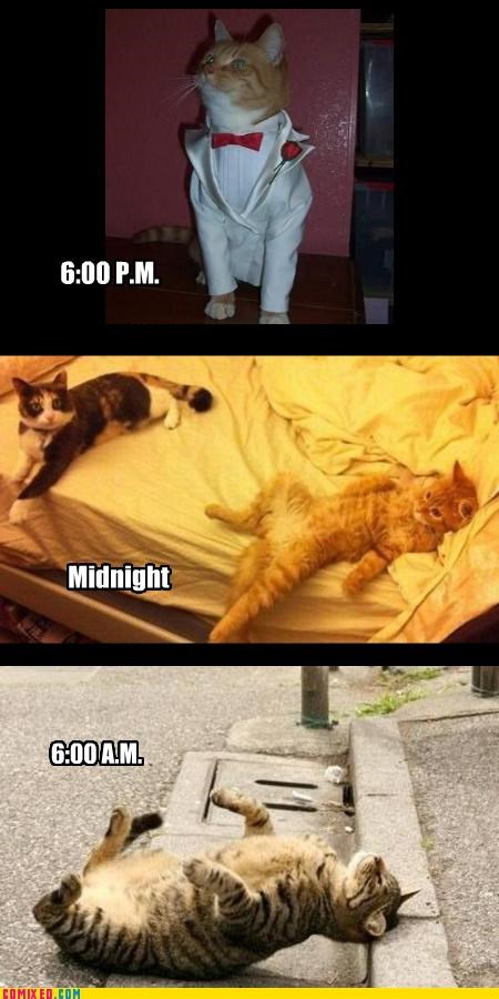 Caturday night out!