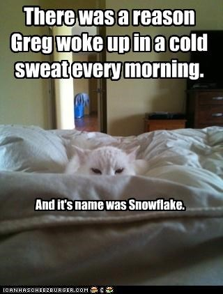 bed,caption,captioned,cat,Cats,Hall of Fame,scary,sleeping,snowflake,sweat,wake up