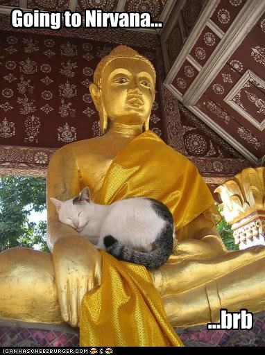 brb,buddhism,caption,captioned,cat,Cats,happy,nirvana,religion,sleeping,statues