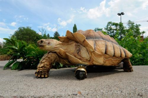 Six Million Dollar Tortoise of the Day