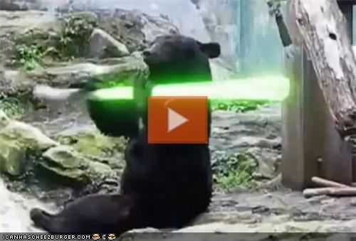 VIDEO: Bear Plays With Lightsaber