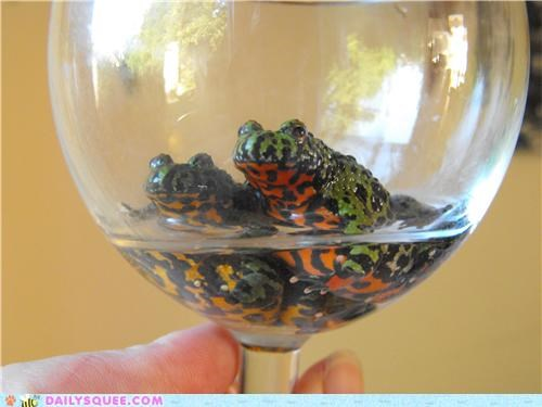 fire-bellied toad,friends,glass,portrait,reader squees,toad,toads,wine