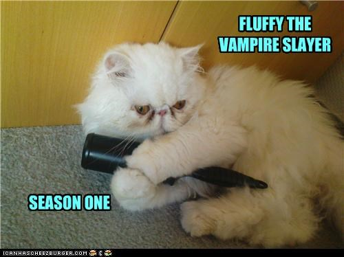 Buffy the Vampire Slayer,caption,cat,Cats,Fluffy,Hall of Fame,stake,tv shows,vampires