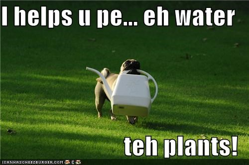 I helps u pe... eh water   teh plants!