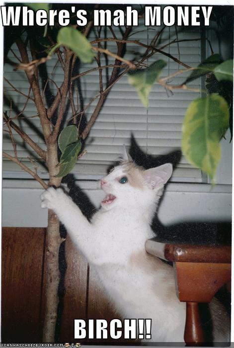 angry,birch,caption,captioned,cat,Cats,money,puns,shakedown,tree