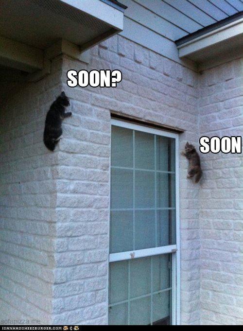 attack,caption,captioned,cat,Cats,climbing,ready,SOON,waiting,wall,window