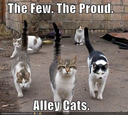 alley,alley cats,caption,captioned,cat,Cats,few,marines,parody,proud,slogan