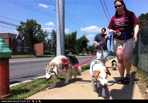 Blind Dog Rescue Alliance,blind dogs,charity,doing good,helping,love,mixed breed,news story,whatbreed