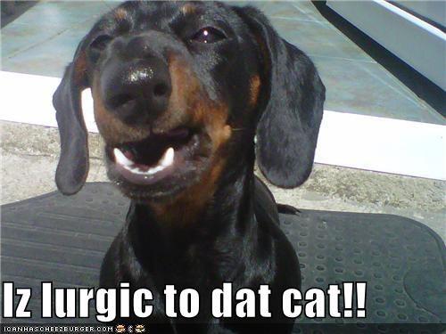 Iz lurgic to dat cat!!