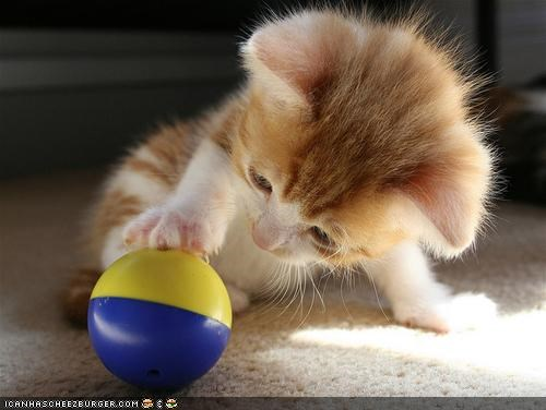 Cyoot Kitteh of teh Day: Ballin'
