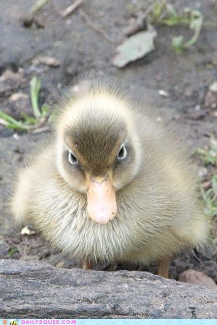 Squee Spree: OH MY SQUEE DUCKLING HOW ARE YOU SO CUTE???