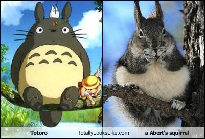 Totoro Totally Looks Like a Abert's squirrel