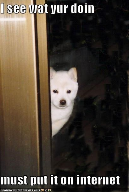 best of the week,everyone is going to know,i saw that,i see you,im-putting-this-on-the-internet,internet,peaking,peaking out,samoyed