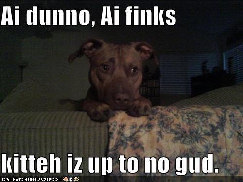 cat,pit bull,pitbull,suspicious,suspicious behavior,up to no good,worried