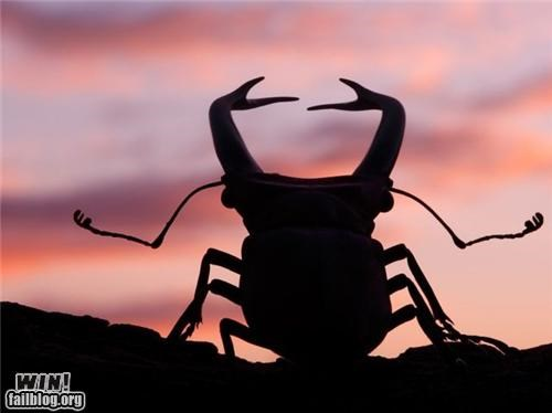 Mother Nature FTW: Rage Beetle