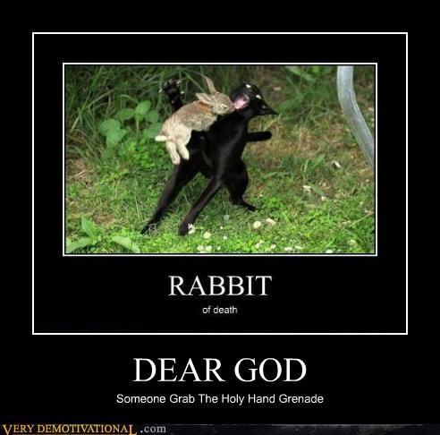 bunny,cat,hilarious,holy hand grenade