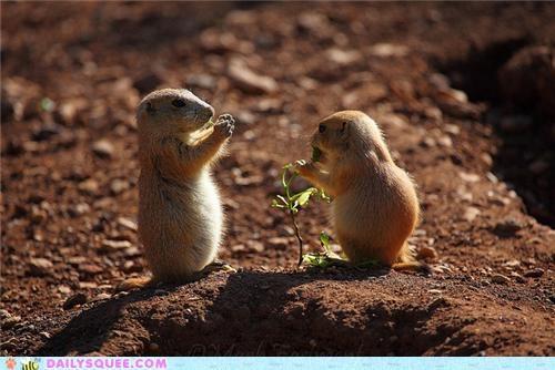 Squee Spree: Prairie Dogs Vs. Marmots!