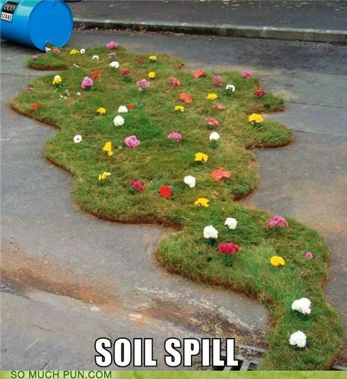 Courtesy BP (British Petunias)