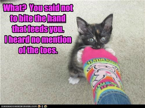 axiom,bite,caption,captioned,cat,feeding,hand,kitten,nomming,sock,specificity,toes,what