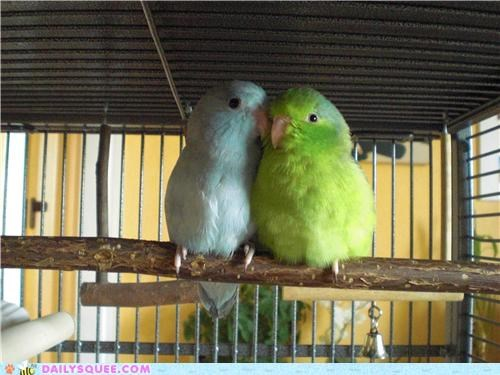 close,cuddling,holding,parrot,parrots,reader squees,safe,squawking,wings