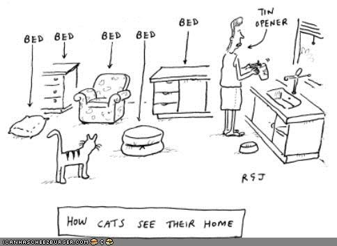 bed,cats own everything,comic,comics,home,self-centered