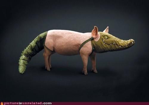 alligator,costume,pig,wtf