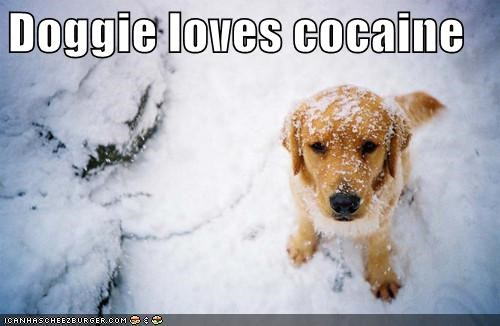 Doggie loves cocaine