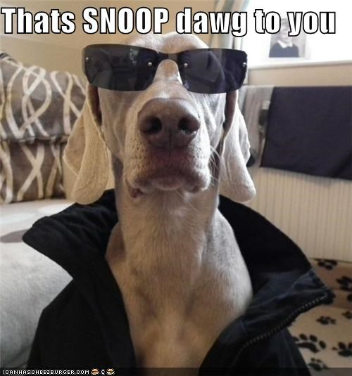 Thats SNOOP dawg to you