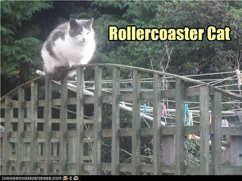 Rollercoaster Cat
