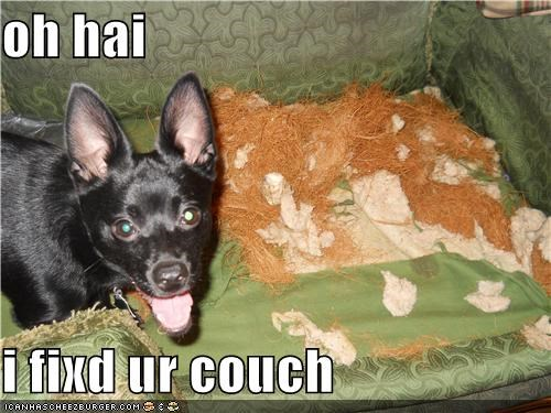 couch,destruction,fify,fixed,fixede it for you,oh hai,repairs,smiles,torn up,whatbreed