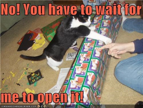 caption,captioned,cat,gift,have to,human,instructions,me,no,open,opening,present,wait,you