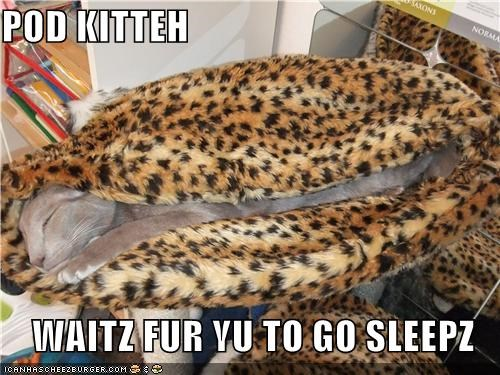 POD KITTEH  WAITZ FUR YU TO GO SLEEPZ